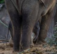 03-04-04-elephant4-1
