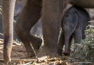 04-06-07-elephant7-1