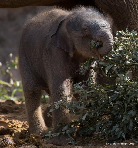 08-10-11-elephant11-1