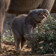 09-11-12-elephant12-1