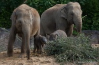 11-15-16-elephant16-1