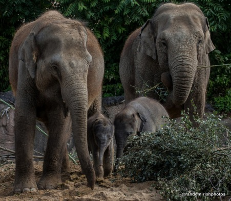 12-16-17-elephant17-1